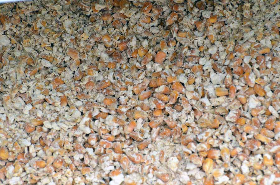 A color photo showing corn kernels.