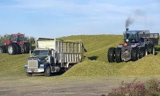 Color image of a straight truck unloading corn silage on a pile with a pushing and packing tractor on the sides of it.