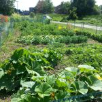 garden plots at the beginning of the gardening season