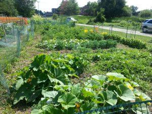 garden plots at the beginning of the gardening season
