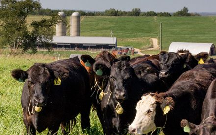 Continued COVID-19 impacts on the cattle market