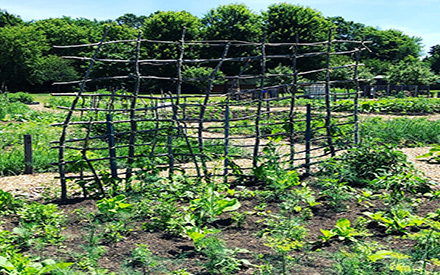 Best Practices for WI Community Garden Organizers