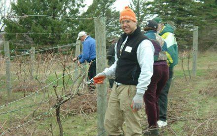 Grape Pruning Workshop, Washburn County