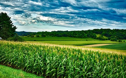 Crop Input Resources for Low Margins