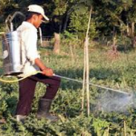 man applying pesticide spray