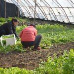 two women farmers in hoop house