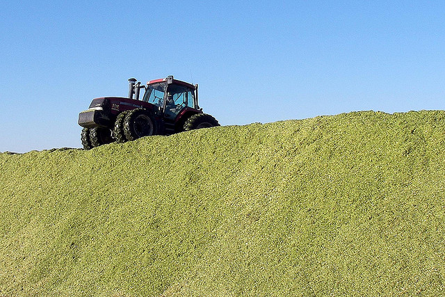 Tractor on top of feed pile