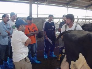 Dr. Rocknow teaching about cattle well-being