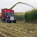 trucks harvesting corn silage