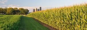 corn field long-washington county