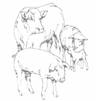 drawing of a steer, pig, and sheep