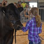 Girl with plaid shirt showing her steer at the Fond du Lac County Fair