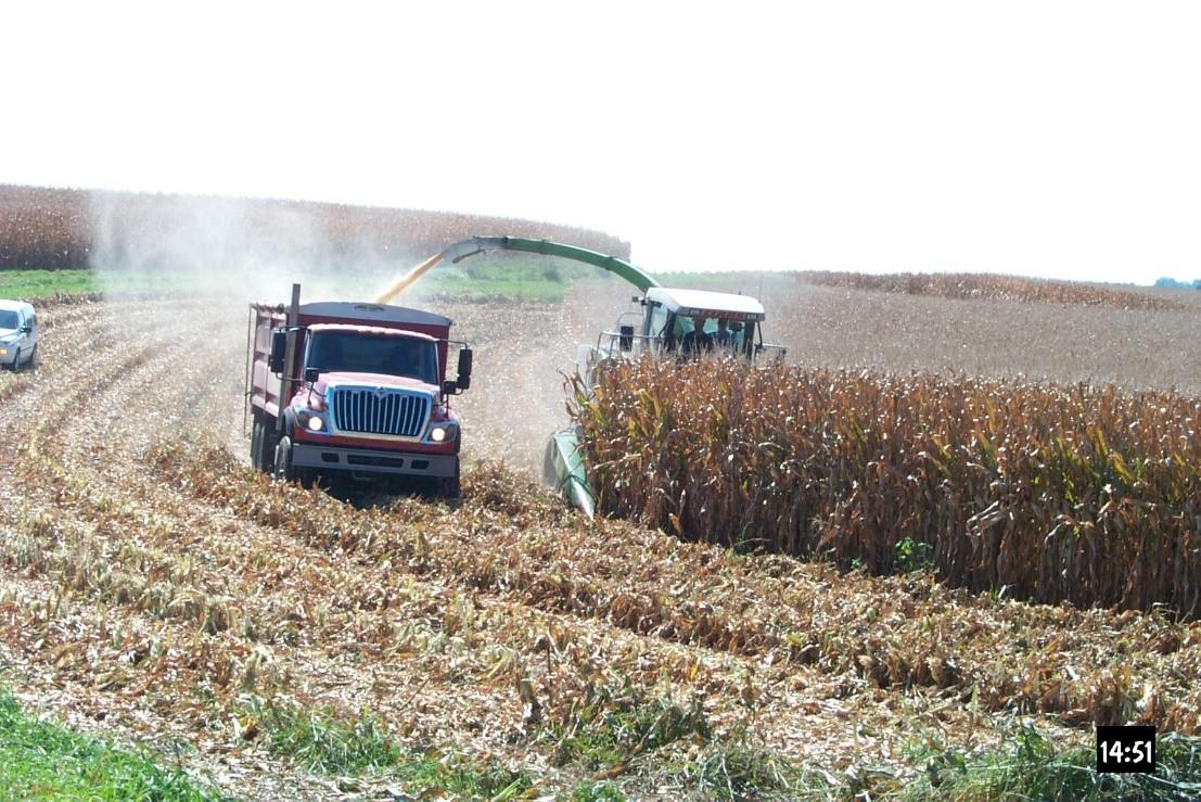 Corn Snaplage Harvest and Feeding – Team Forage