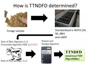 Figure 1. How is TTNDFD determined
