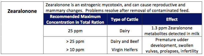 Mycotoxin Effects on Dairy Cattle – Team Forage