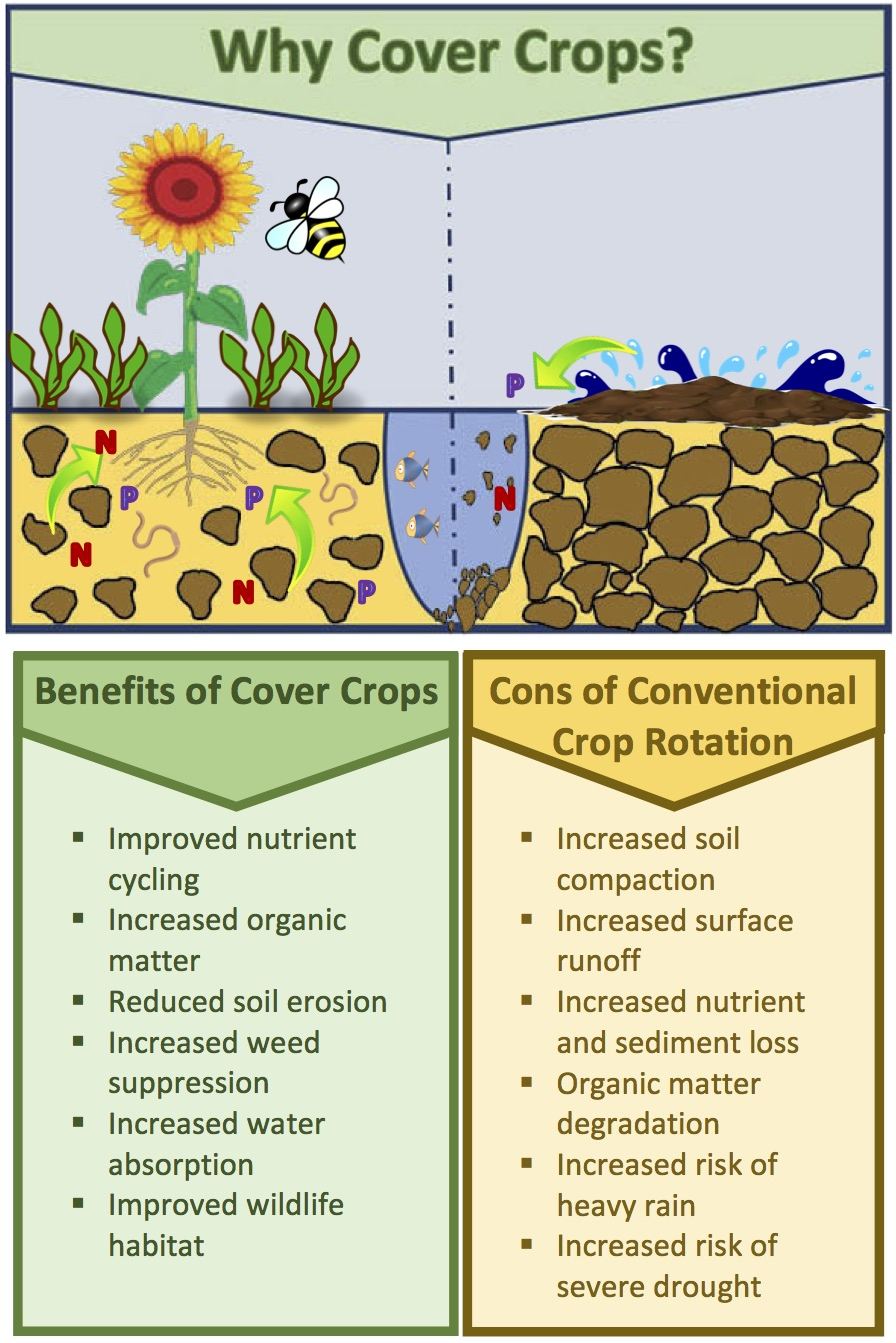 Permanent Soil Cover: Cover Crops