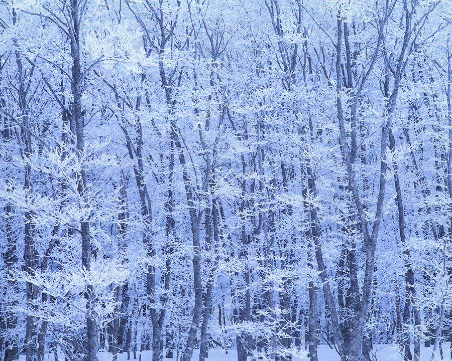 Frost Coating Forest