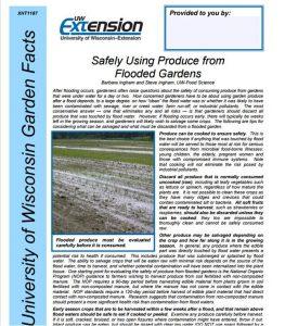 Flooded_Garden