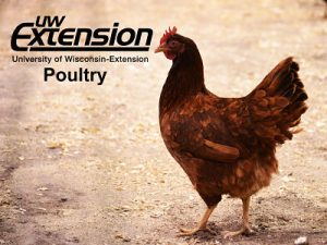 Go to Wisconsin Poultry Extension website.