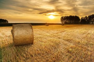 round hay bale in field at sunset