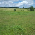 unevenly grazed pasture with blue cloudy sky