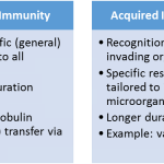 passive vs. acquired immunity highlights