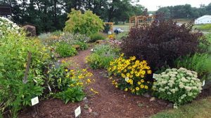 Wood chip path leading into the Spooner Agriculture Research Station AAS Display Garden. The path is surrounded by summer-blooming perennials, shrubs of different colors and textures, and markers identifying each type of plant.