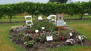 Tea garden featuring many types of flowers that attract pollinators. Flowers are mostly in shades of white, pink, and purple. Display includes a small patio table and two chairs at the center and two white teapots on the table. In the background you can see the Spooner Ag Research Station trial grape plants.