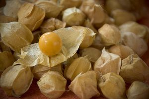 Ground Cherry in husk