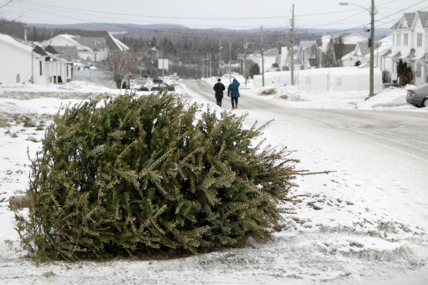 Life Of A Christmas Tree