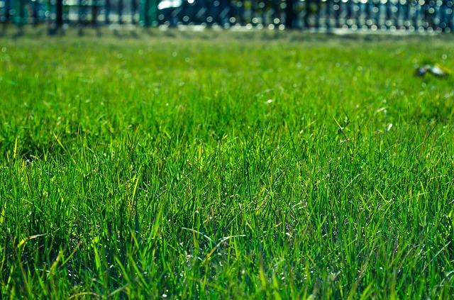 lawn-327333_640