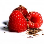 raspberry_chocolate