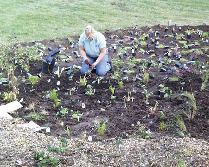 UWEX Jef Cty planting#99D29