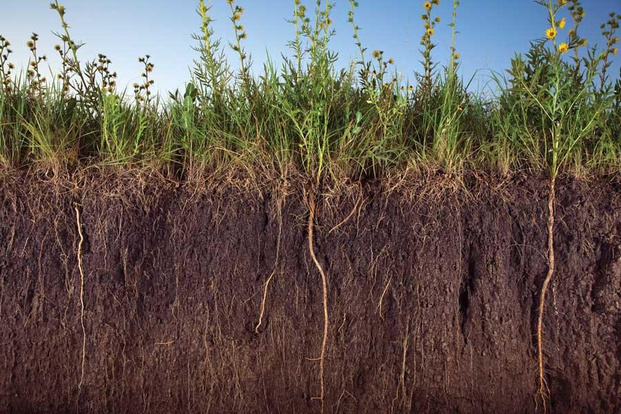 Managing nutrients on wisconsin soils workshop webinar for The soil 02joy
