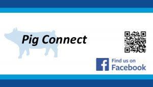 Pig Connect Business Card front