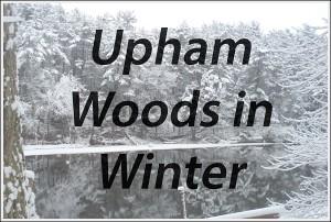 Winter_HeadingPic2_opt_600px