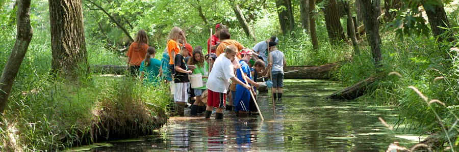 Children collecting wacky water critters