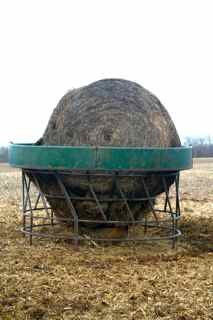 Tips To Reduce Winter Feeding Hay Costs For Beef Herd Wi
