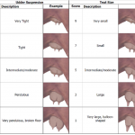 This chart is used with permission from the American Red Angus Association