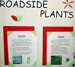 plantsroadside