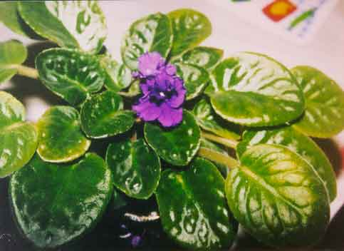 Plants ID – Flowers and Indoor Plants – Wisconsin 4-H Projects on aquarium plant id, house plant name, tropical plant id, house plant identification by flower, house plant identification by leaf, house plant identification guide, house plant propagation, house plant bugs identification, house plant pests, house plant wall,