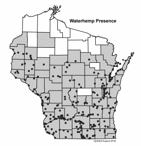 map of waterhemp presence in WI