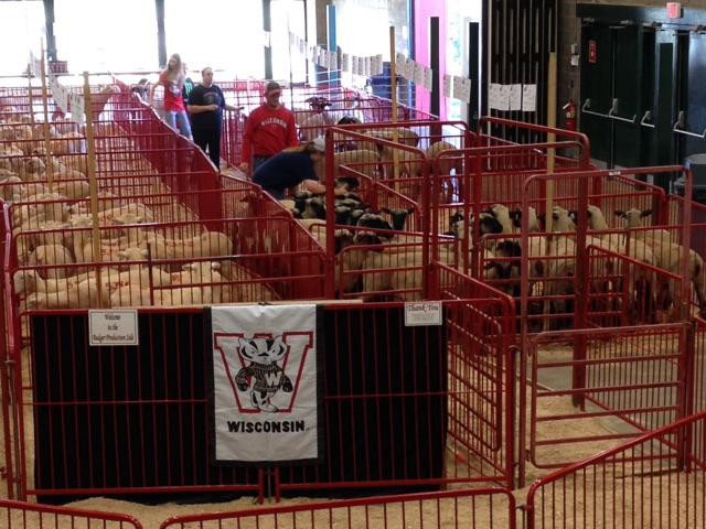 2015 Badger Production Sale Results – Wisconsin Sheep and